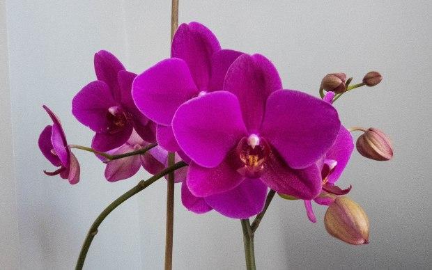 Ikea flower 2
