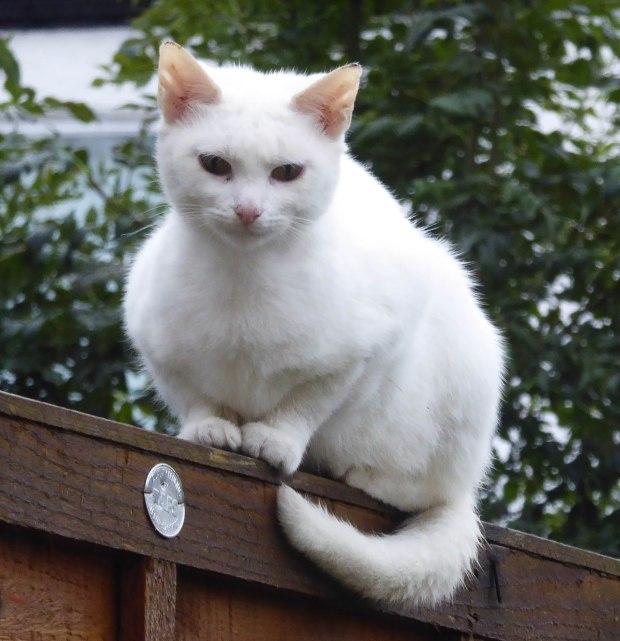 White Cat 1