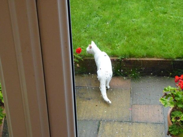 White Cat 5