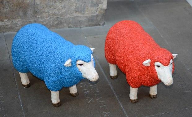 wool week 3-1193