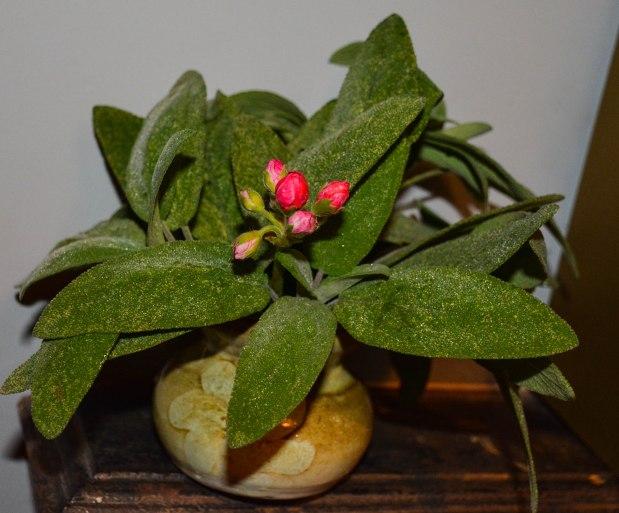 geraniums 6