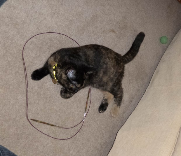 cat circle 11
