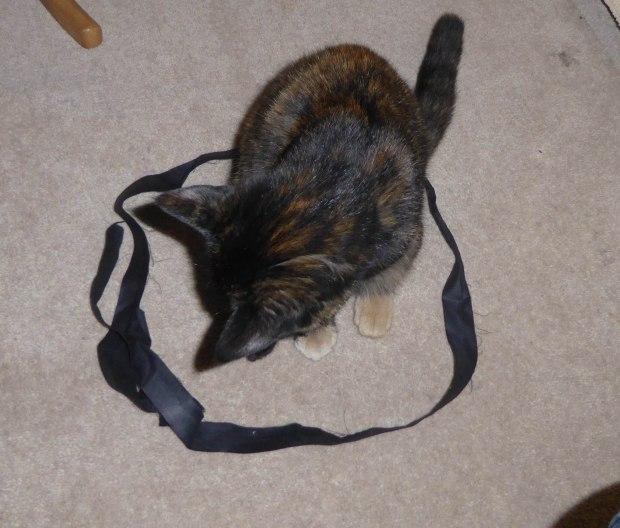 cat circle 14