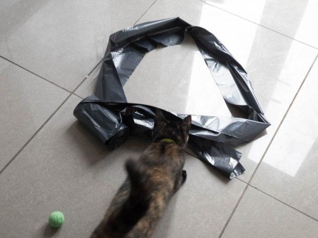 cat circle 2