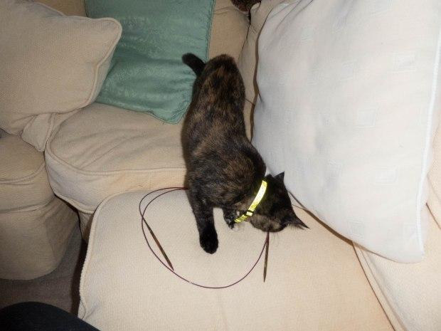cat circle 6