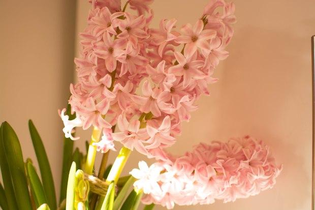 Hyacinths 3