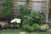 garden in May 1