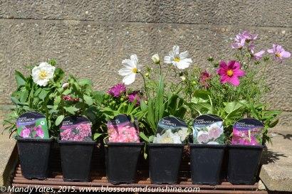 garden in May 12