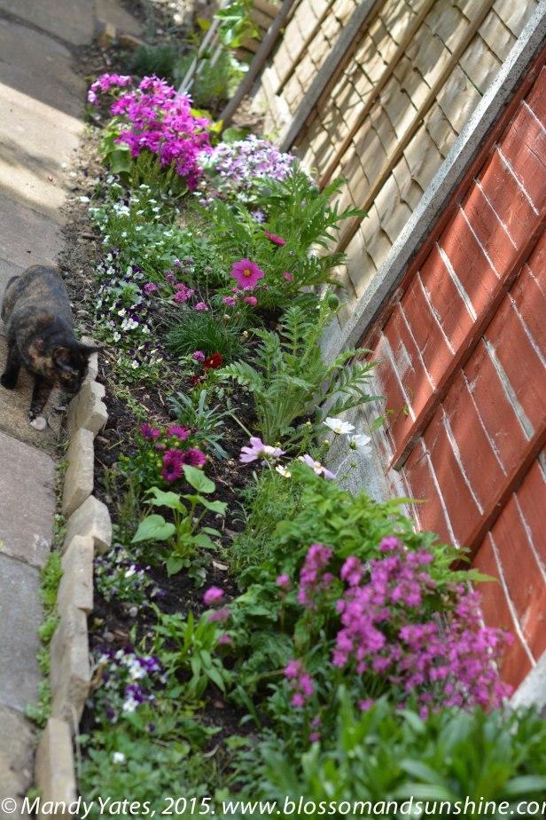 garden in May 3