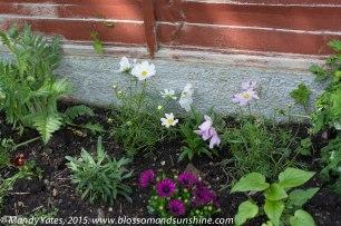 garden in May 5