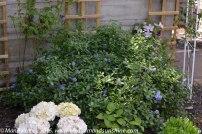 garden in May 7