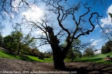 Kew Gardens. 13