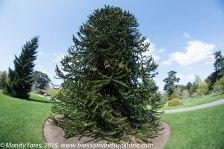 Kew Gardens. 14