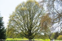 Kew Gardens. 16