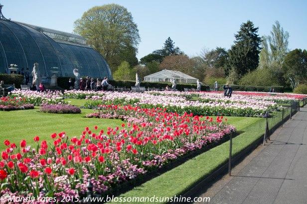Kew Gardens. 26