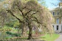 Kew Gardens. 4