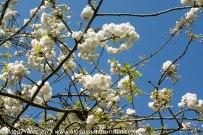 Kew Gardens. 6