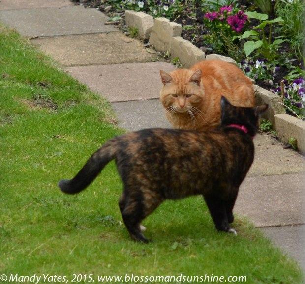 London cats 1