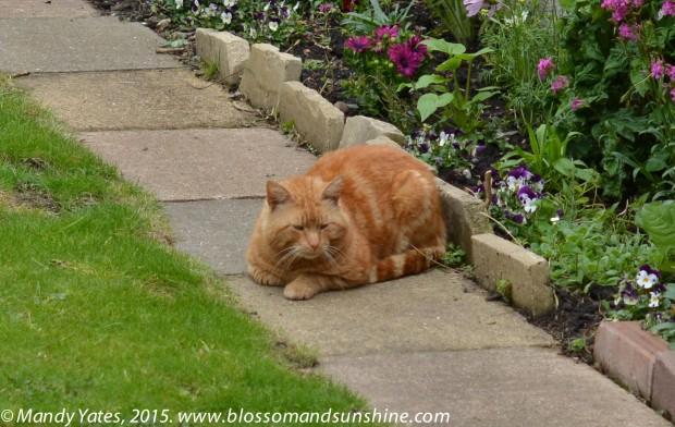 London cats 2