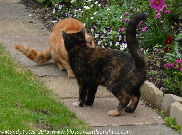 London cats 3