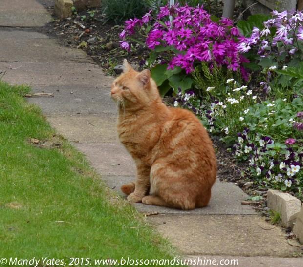 London cats 4