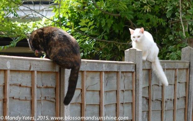 London cats 6