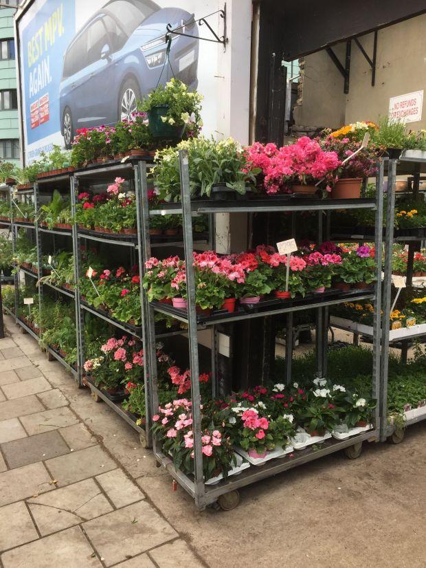 plant shop 2
