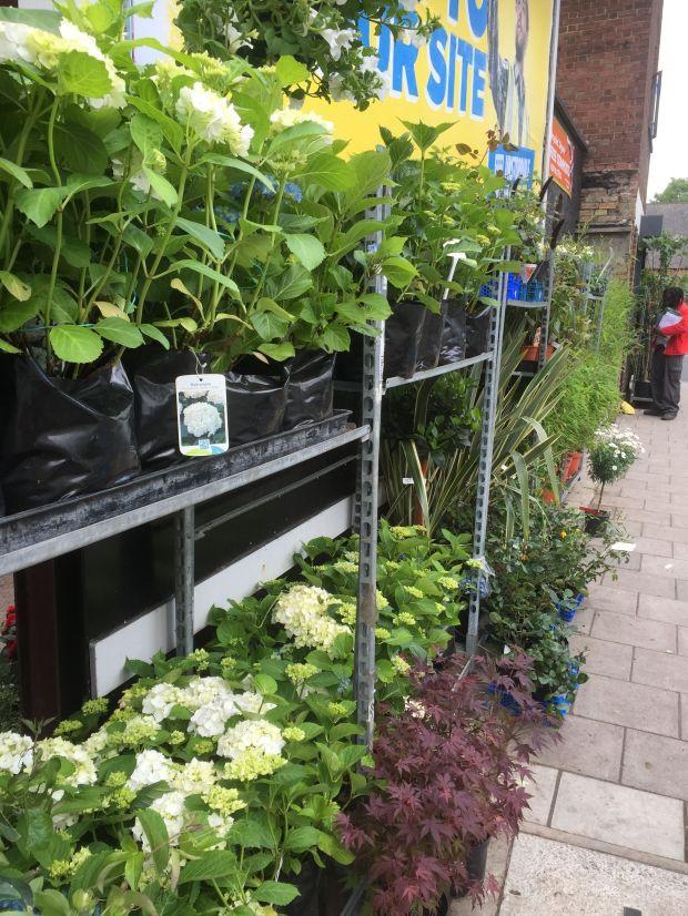 plant shop 3