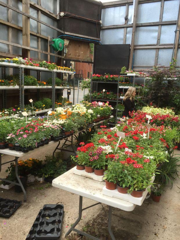 plant shop 4