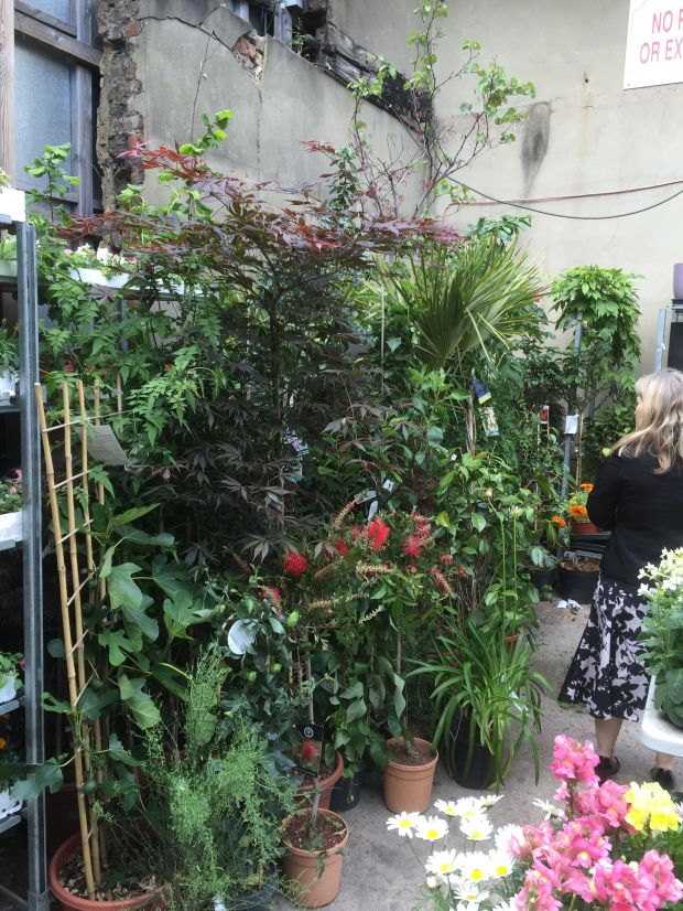 plant shop 5