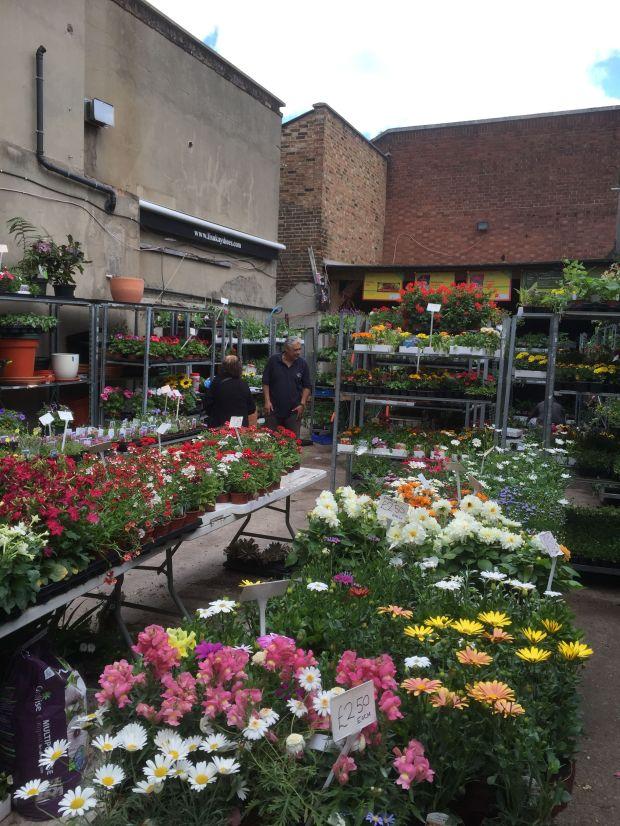 plant shop 6