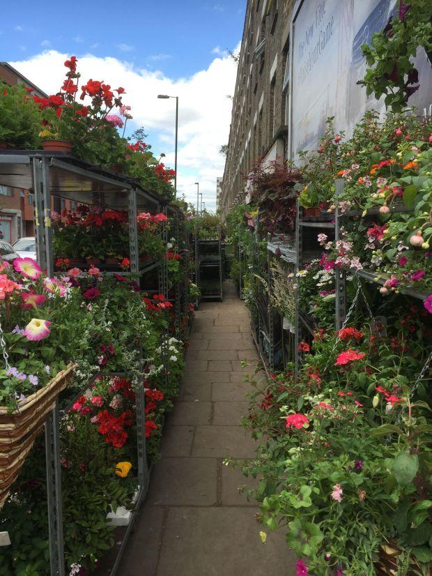 plant shop 7