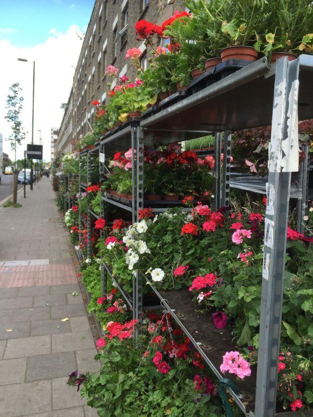 plant shop 8