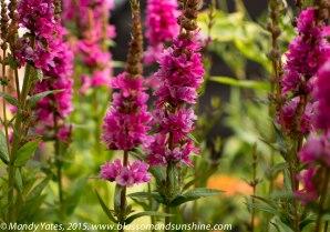 Hampton Court Flower Show 20
