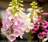 Hampton Court Flower Show 22