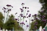 Hampton Court Flower Show 26