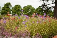 Hampton Court Flower Show 3