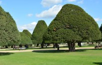 Hampton Court September 2015 12