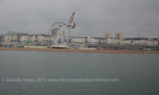 Brighton 12