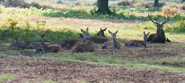 Richmond park 2