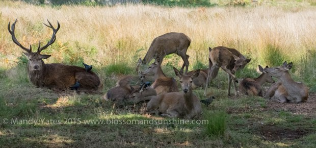 Richmond park 3