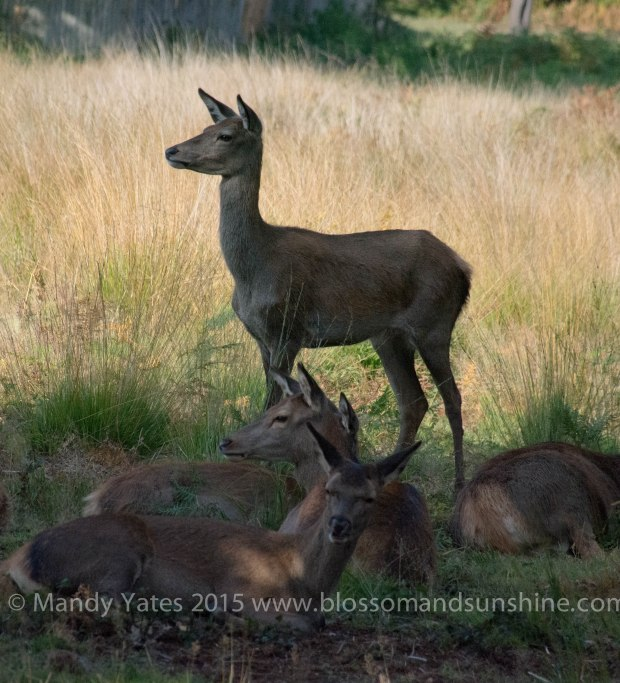 Richmond park 4