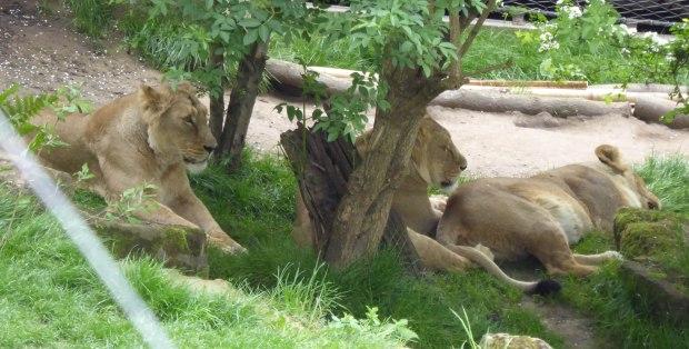 Zoo birthday May 2016 5 (1 of 1)