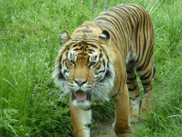 Zoo birthday May 2016 6 (1 of 1)