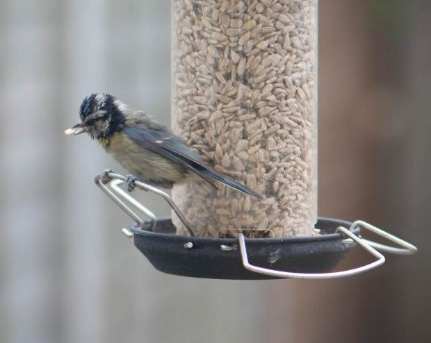 Birds 1 (1 of 1)