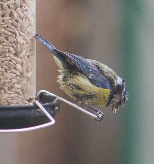 Birds 2 (1 of 1)