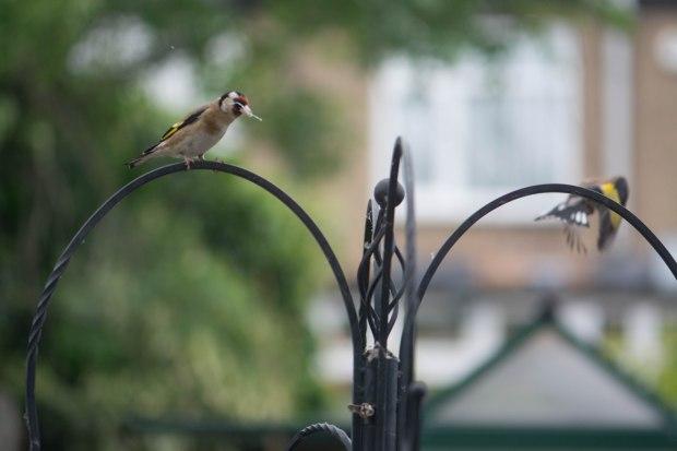 Birds 6 (1 of 1)