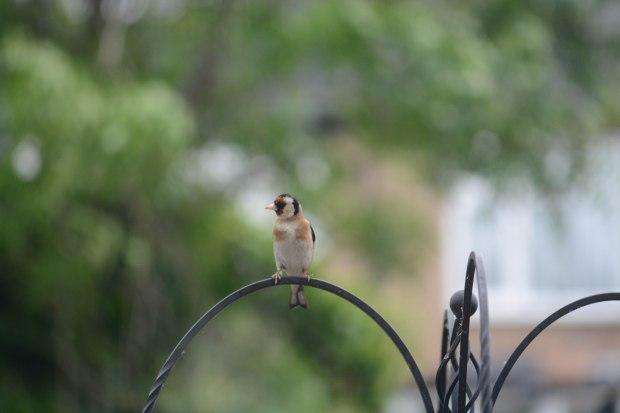 Birds 7 (1 of 1)