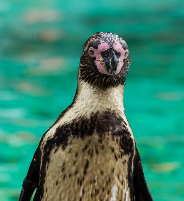 London zoo August 2016 9 (1 of 1)