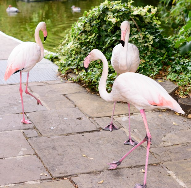flamingos-1-1-of-1